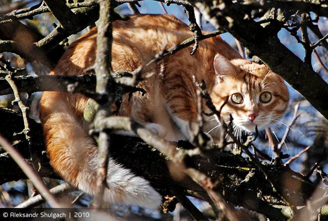 Мартовский кот на дереве