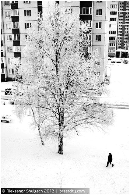 Черно-белое утро