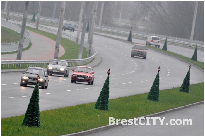 Елки вдоль новой трассы в Бресте (Западный обход)