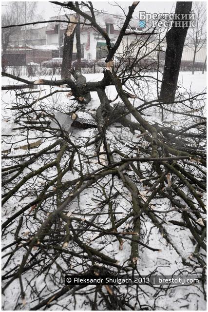 В центре Бреста упало дерево. Улица Мицкевича