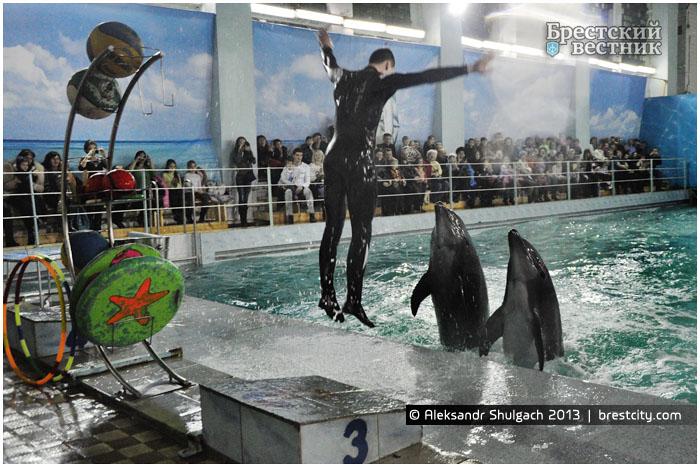 Открытие дельфинария в Бресте 08.02.2013