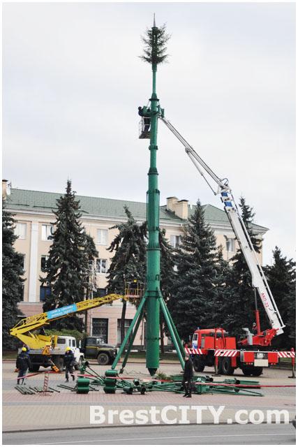 Главная городская елка в Бресте на площади Ленина