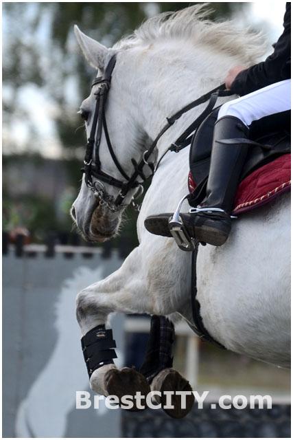 Соревнования по конному спорту в Бресте