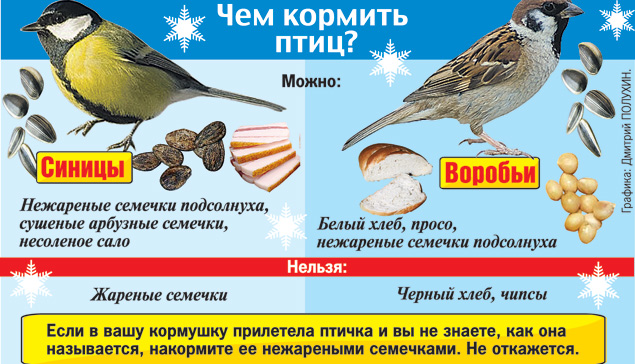 Чем покормить птиц зимой