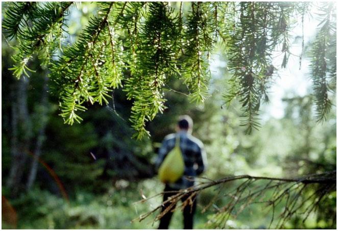 Что делать, если заблудился в лесу