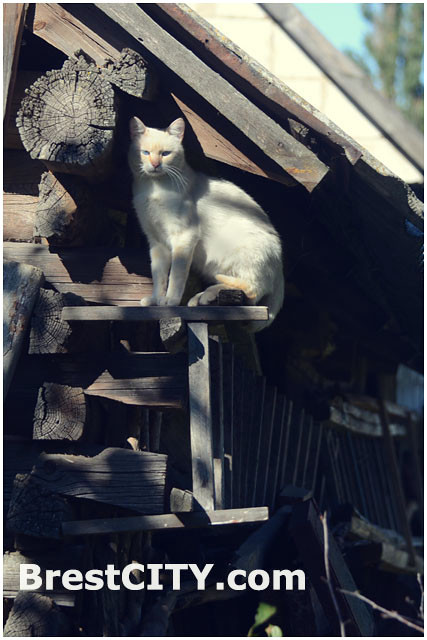 Деревенский кот сидит на крыше
