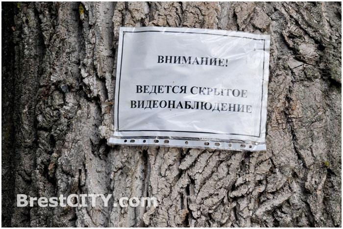 Скрытое видеонаблюдение. Камеры в лесу