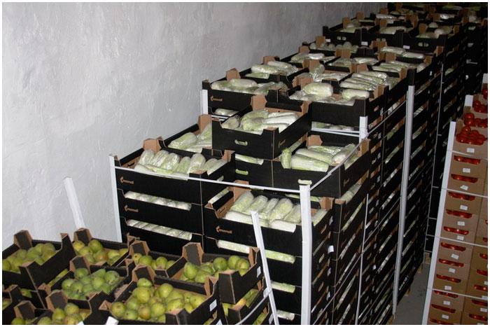 100 тонн плодовоовощной продукции из Польши в Россию