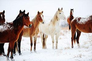 Табун лошадей нарушил польско-белорусскую границу