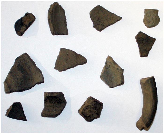 Кремниевый нож эпохи неолита найден в Беловежской пуще