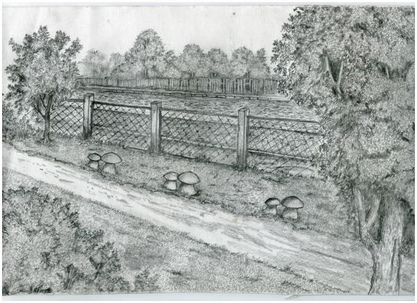 Деревянные грибы-сиденья у ограды парка