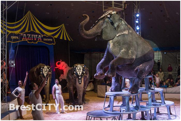 Цирк-шапито Дзива в Бресте с 4 октября 2014