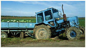 Трактор Беларус на дороге