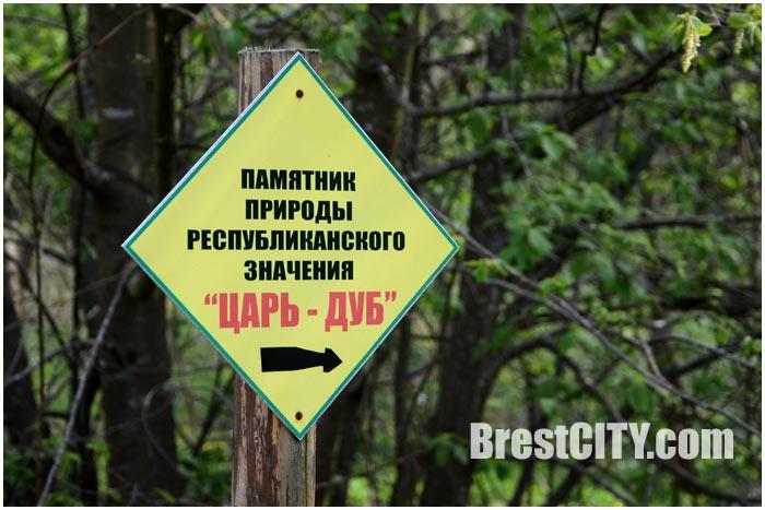 Царь-дуб в Малоритском районе Брестской области. Пожежин
