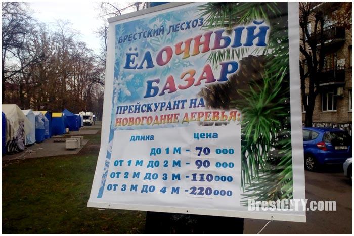 Продажа живых елей в Бресте. Цена от 70 до 220 тысяч