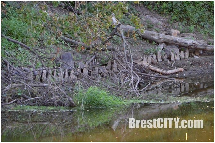 Набережная старого Берестья в крепости. Фото BrestCITY.com