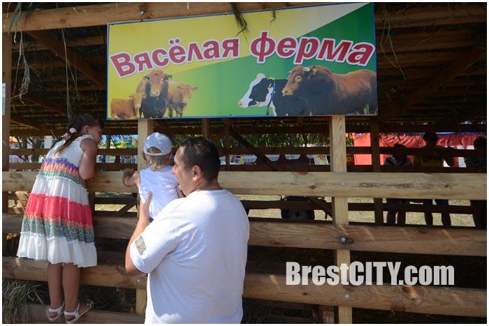 Мотольские прысмаки 2015 в Ивановском районе. Фото BrestCITY.com