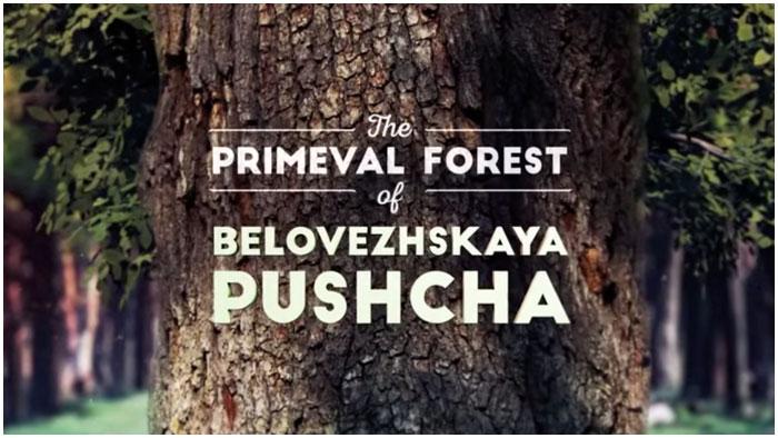 Беловежская пуща. Первобытный лес