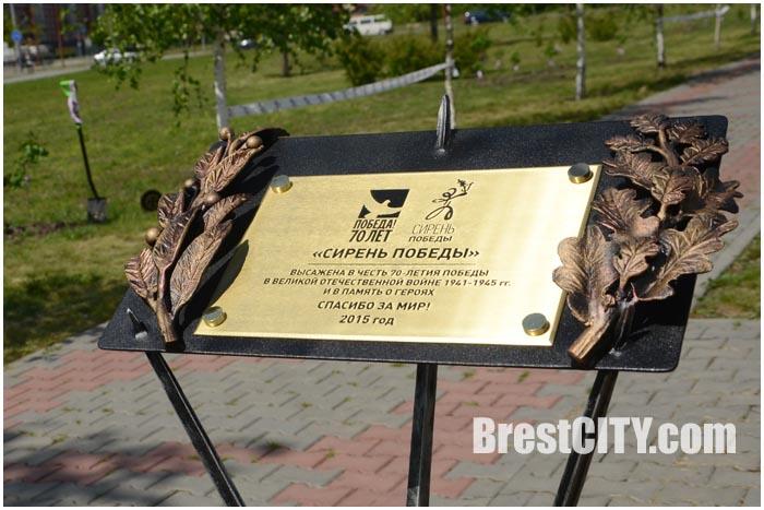 В Бресте открыли Сирень победы. Памятный знак и аллея