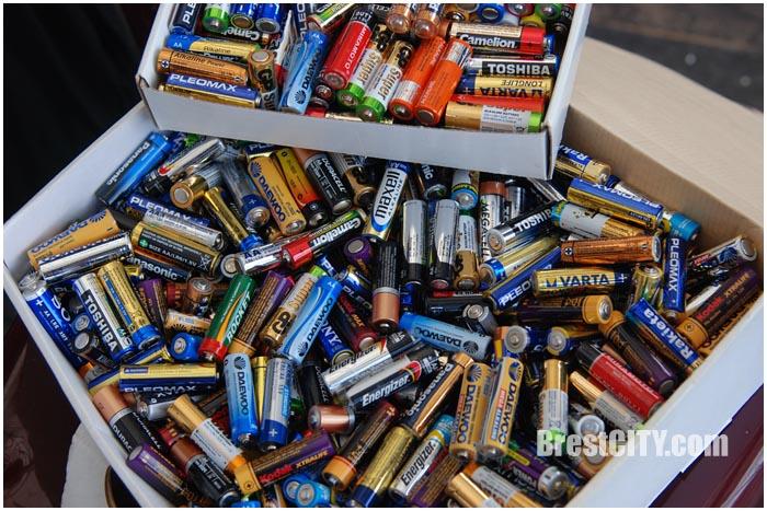 Старые батарейки и макулатуру меняли в городском парке Бреста