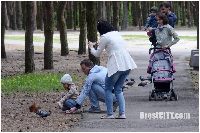 Белка в брестском парке воинов-интернационалистов. Фото BrestCITY.com