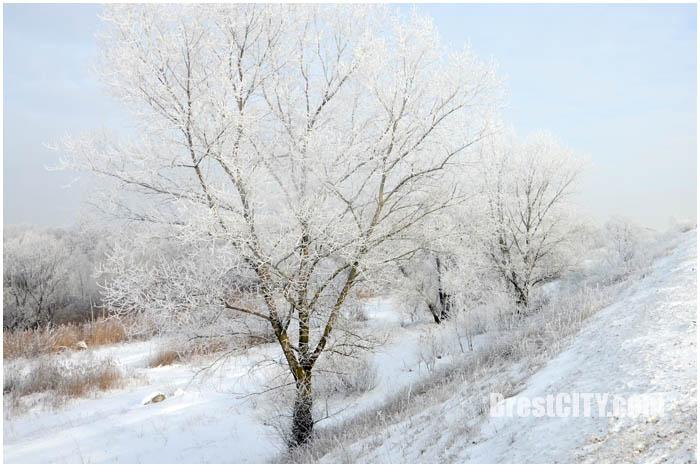 Красивые зимние пейзажи Бреста. Январь 2016. Фото BrestCITY.com
