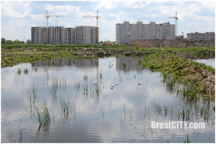 Чайки. Брест. Строительство нового микрорайона. Фото BrestCITY.com