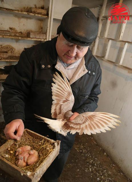 Голубятник Дмитрий Сарамуд