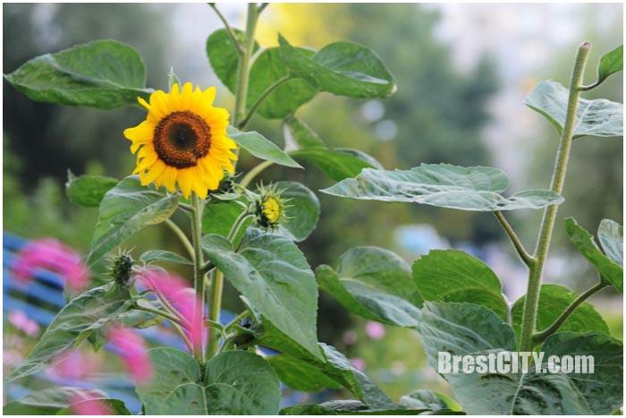 Последний день лета. Фото BrestCITY.com