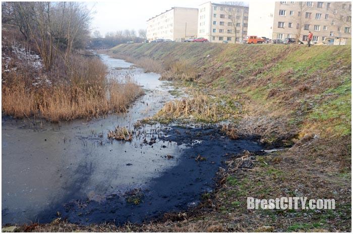 Обводной канал крепости загрязнен нефтепродуктами. Фото BrestCITY.com