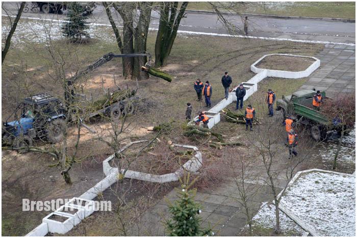 В Бресте пилят деревья
