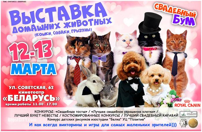 Свадебный бум. Выставка домашних животных