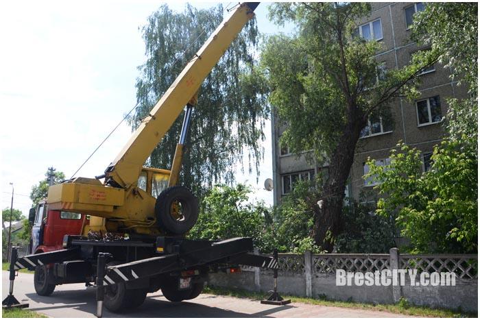 На пятиэтажку упало дерево в Бресте на Л.Рябцева