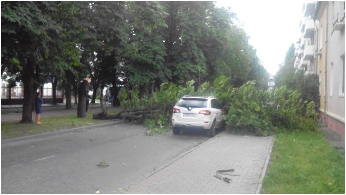 Ветер повалил на машину дерево