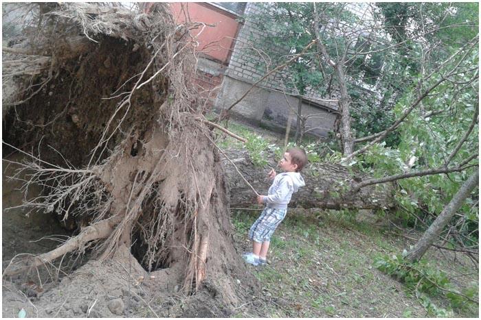 Ветер ломает деревья. Брест