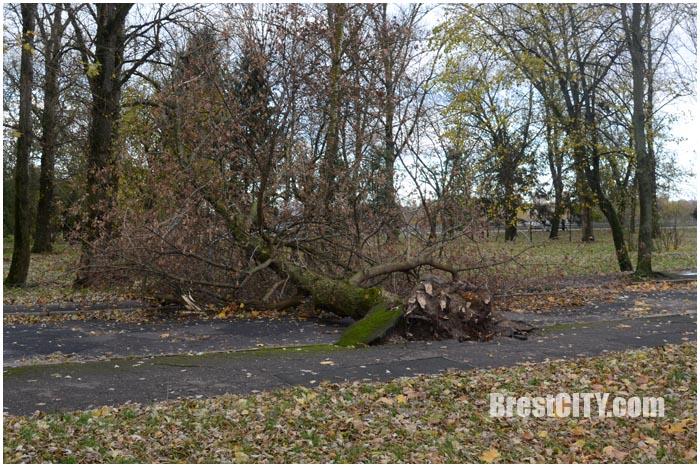 Ураганный ветер на Набережной в Бресте повырывал деревья. Фото BrestCITY.com