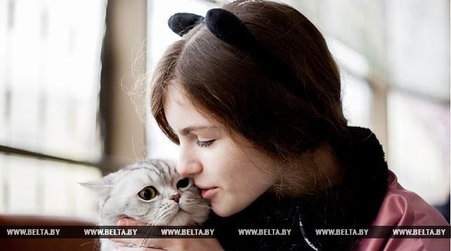 Выставка кошек в кинотеатре Беларусь. Брест 5-6 ноября 2016