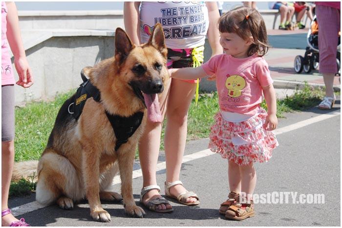 Зоозабег с собаками на Гребном в Бресте 24 июля 2016. Фото BrestCITY.com