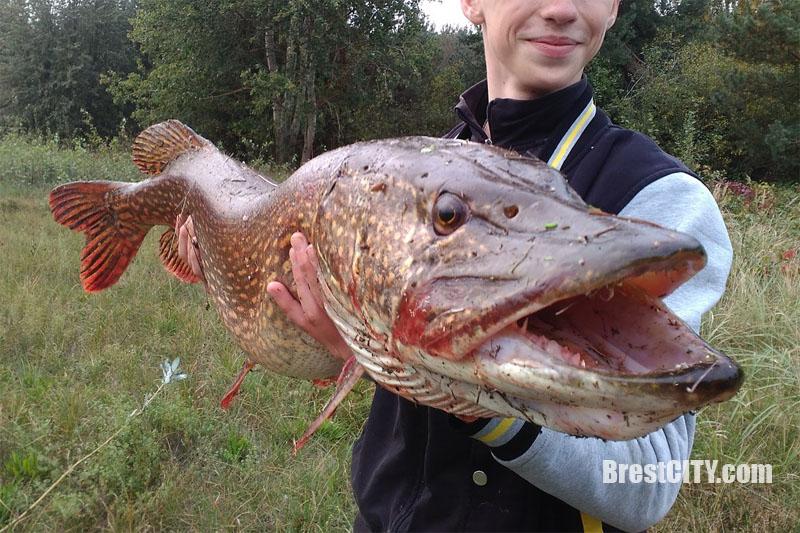Юный рыбка из Березы