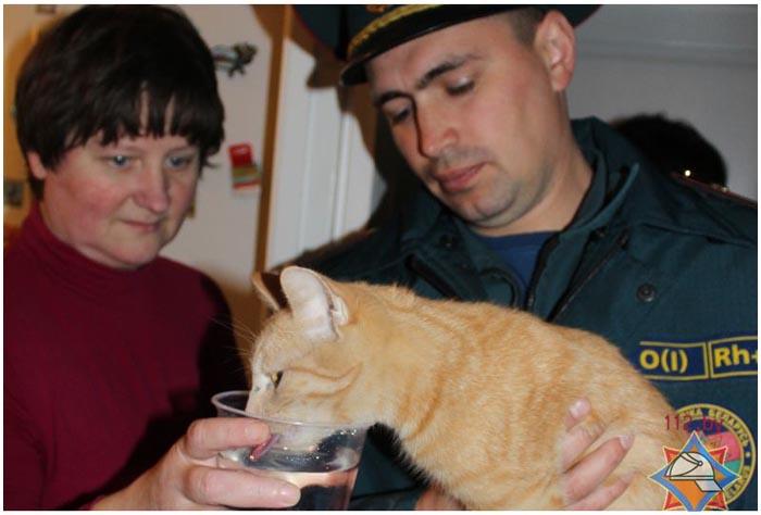 В жилом доме кошка упала в вентиляционную шахту