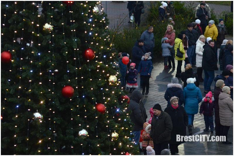 Новогодняя елка возле Экватора. Магазин Грин