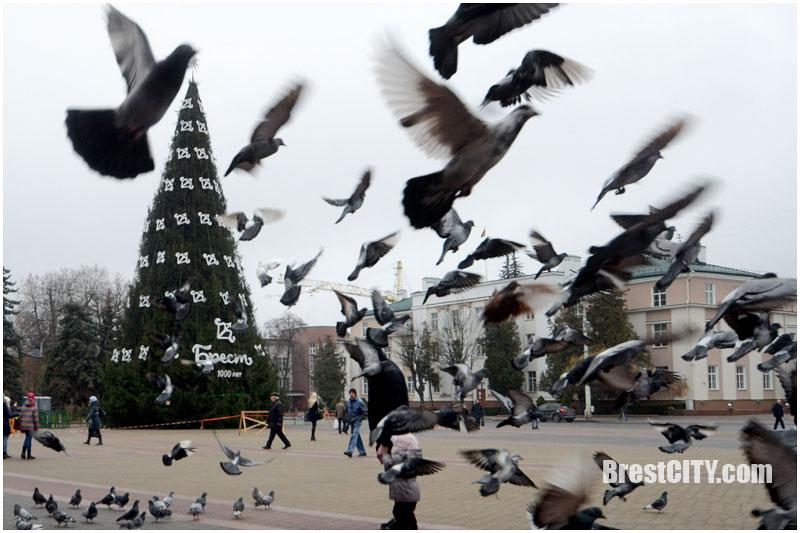 Городская елка. Символ 1000-летия