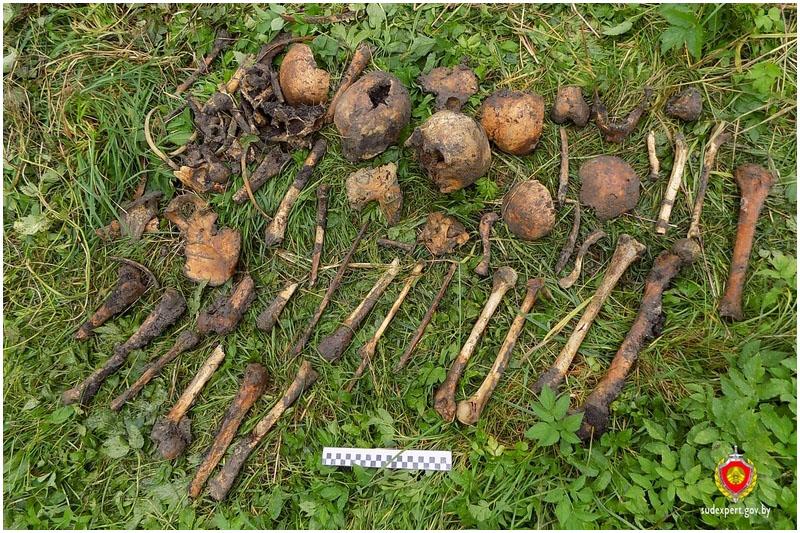 В Каменце обнаружены костные останки времен Второй мировой войны