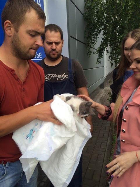 В Бресте спасали под обшивкой магазина кота