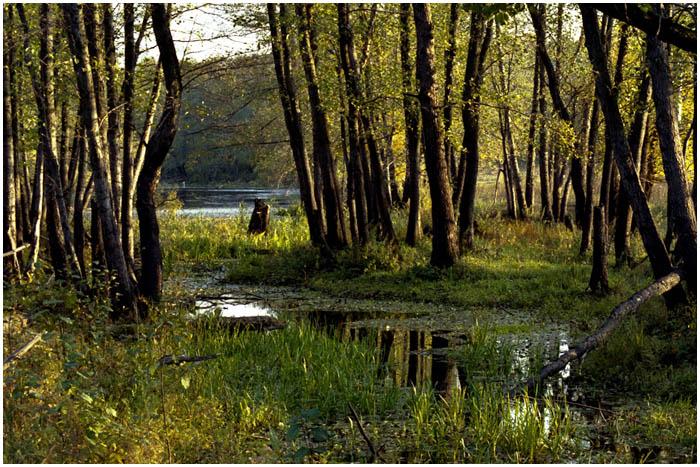 Природа. Лес и река
