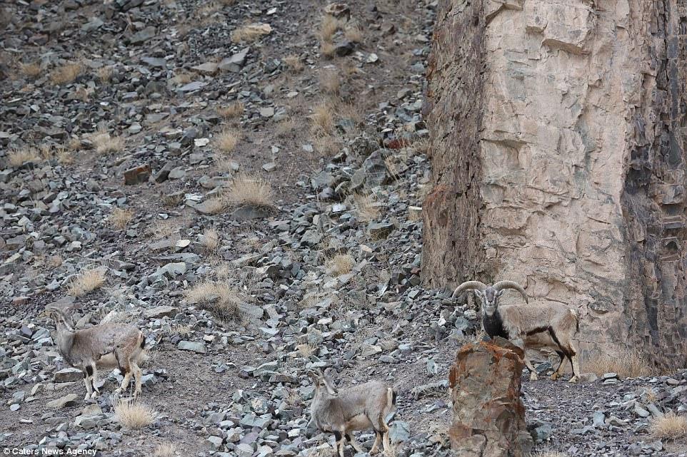 Найти леопарда