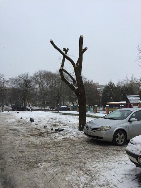 Брестчанка не дала спилить дерево на улице Пушкинской