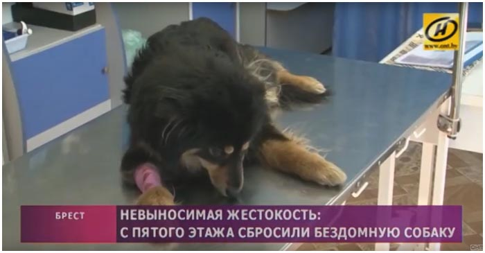 В Бресте собаку сбросили с пятого этажа
