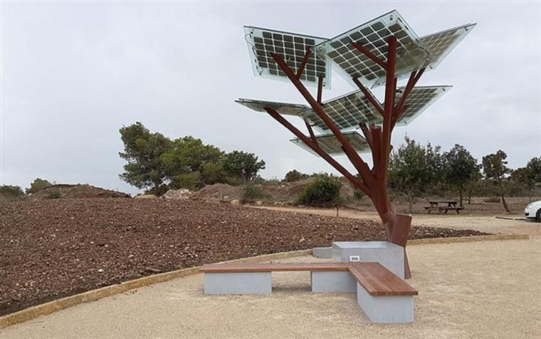 Солнечное дерево в парке
