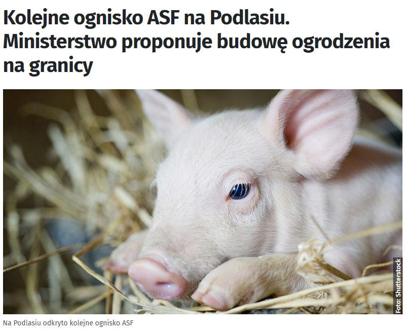 Африканская чума свиней. Польша хочет построить забор на границе с Беларусью и Украиной